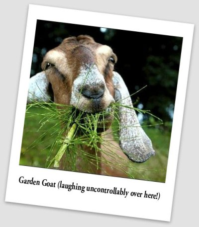 Gardengoat_polariod_angle-Laughing-text