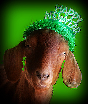 The Garden Goat looking forward to the Best Year ever 2013!